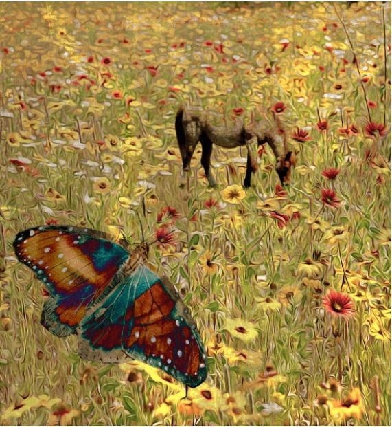 Cynthia Sanders Flower Images