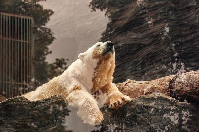 Wildlife photography props