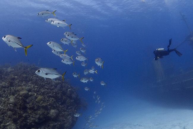 Fundamentals of underwater photography