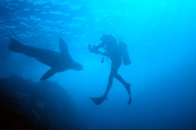 Underwater photography techniques