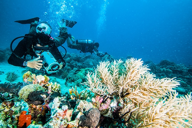 A Complete Guide to Underwater Photography