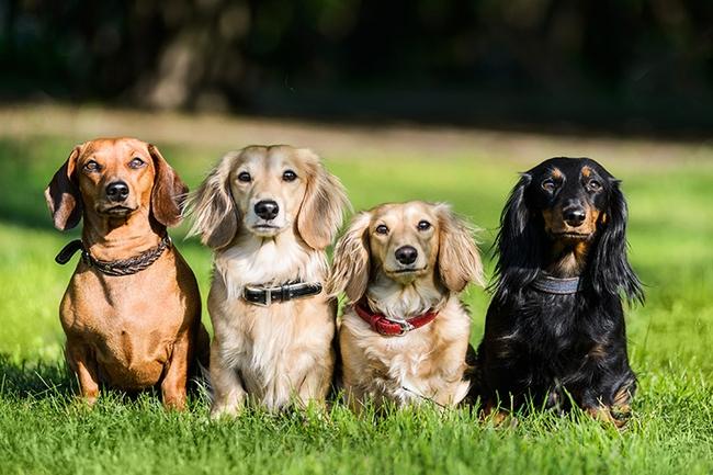 Group pet photography