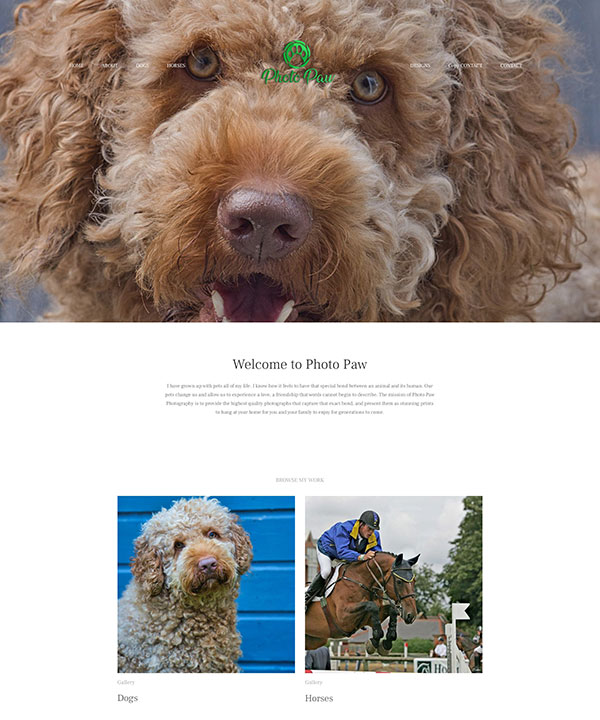Liz Portfolio Website Examples